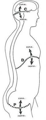 l'ostéopathie viscérale