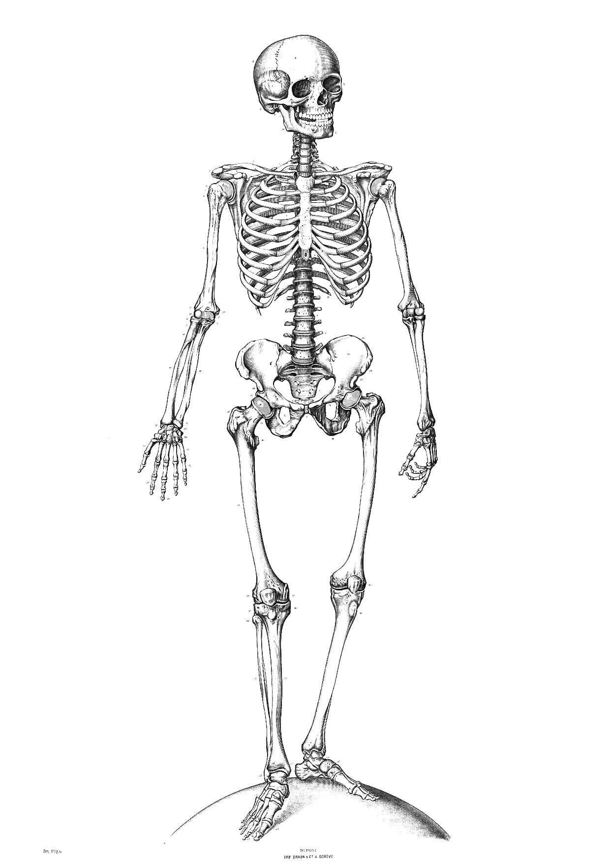 squelette-9340