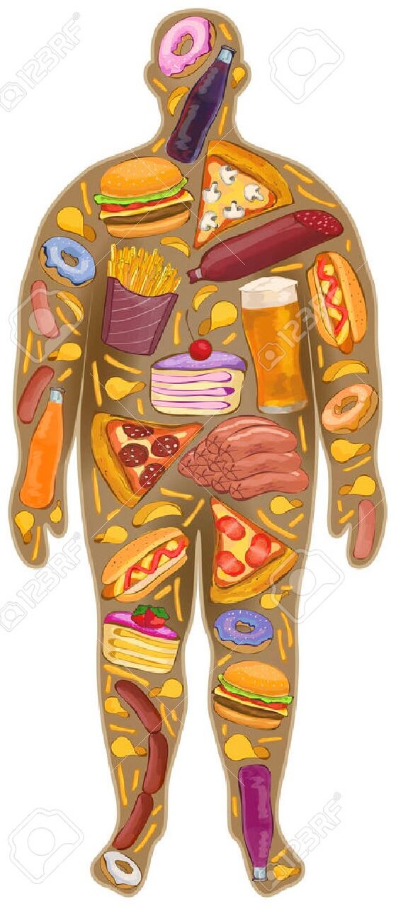 50549801-Humaine-mince-la-graisse-Nutrition-la-nourriture-Nouveau-illustration-Banque-d'images