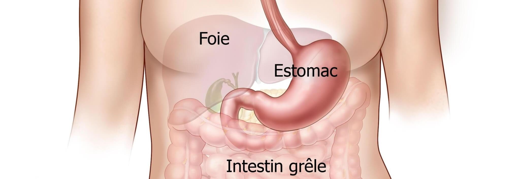 L'Estomac