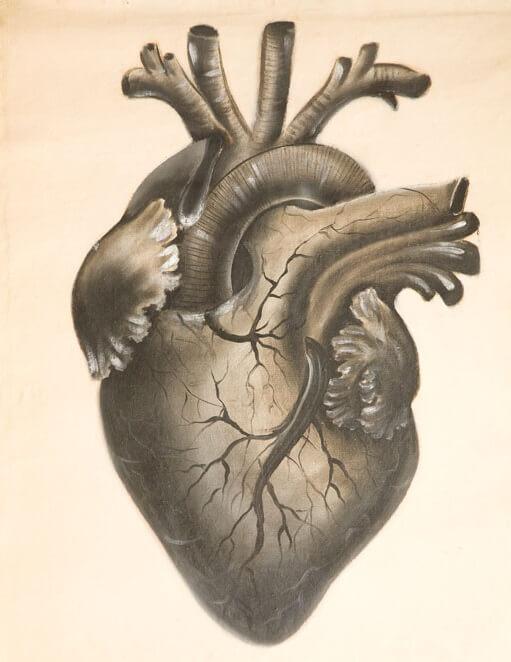 cœur schéma