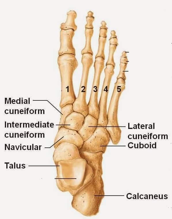 os pied cheville